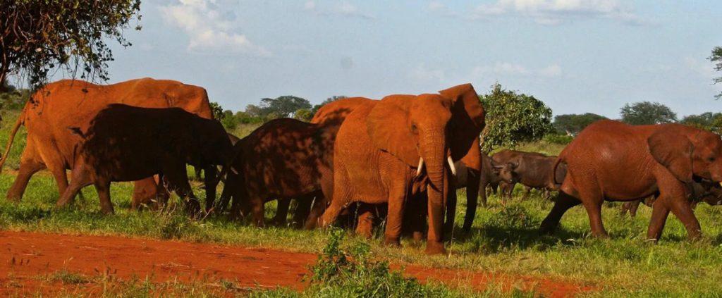 Safaris de Fred